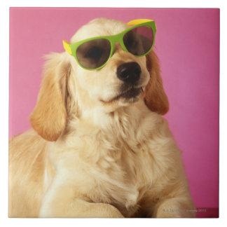 Gafas de sol que llevan 2 del perro tejas