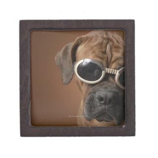 Gafas de sol que llevan 3 del perro caja de recuerdo de calidad