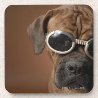 Gafas de sol que llevan 3 del perro posavasos de bebida