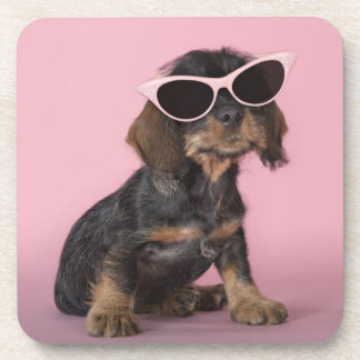 Gafas de sol que llevan del perrito del Dachshund Posavasos De Bebidas