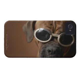 Gafas de sol que llevan del perro iPhone 4 cobertura