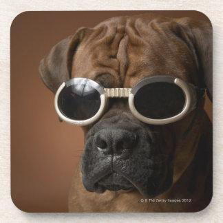 Gafas de sol que llevan del perro posavasos de bebidas