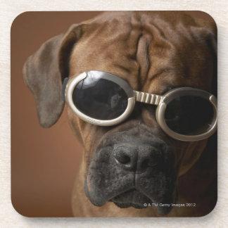 Gafas de sol que llevan del perro posavasos de bebida