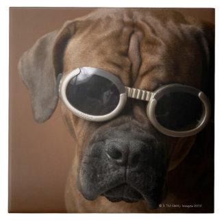 Gafas de sol que llevan del perro tejas