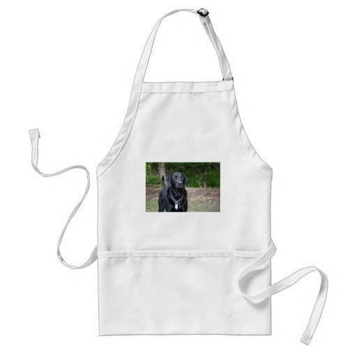 Gage - Black Labrador Aprons