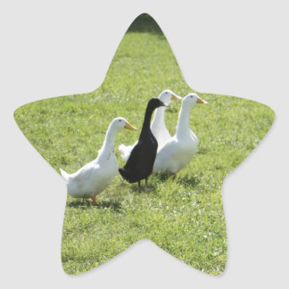 Gaggle of Geese Star Sticker
