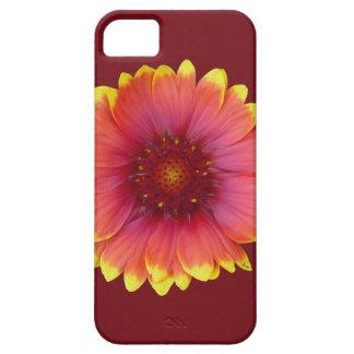 Gaillardia 1 iPhone 5 case