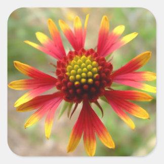 Gaillardia del wildflower del desierto de pegatinas cuadradases