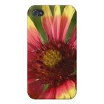 Gaillardia iPhone 4 Case