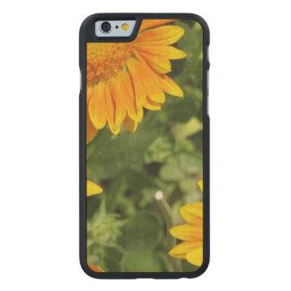 gaillardias-2.jpg carved® maple iPhone 6 slim case
