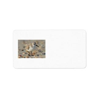 Gaitero y Seashells de la arena Etiquetas De Dirección