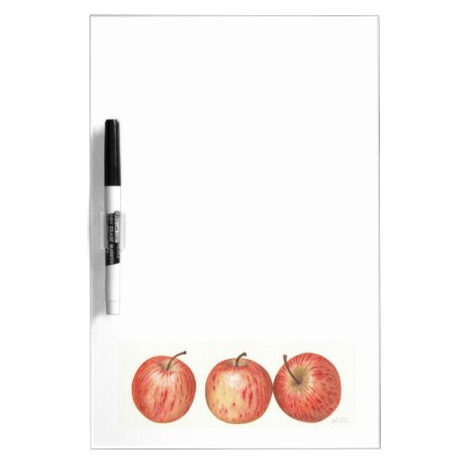 Gala apples Dry erase board.