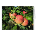 Gala Apples Stationery Note Card