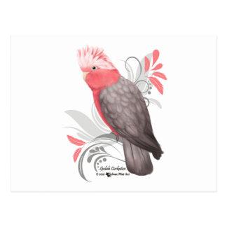 Galah Cockatoo Postcard