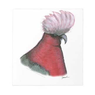 galah cockatoo, tony fernandes notepad