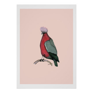 galah cockatoo, tony fernandes poster