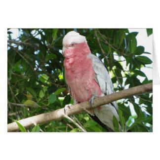Galah (Rose Breasted/Roseate Cockatoo) Card