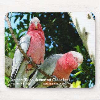 Galahs (Cockatoo color de rosa de Breasted) Alfombrillas De Ratón