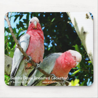 Galahs (Rose Breasted Cockatoo) Mouse Pad