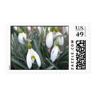 Galanthus Nivalis Postage Stamps