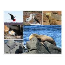 galapagos animal sea lion postcard
