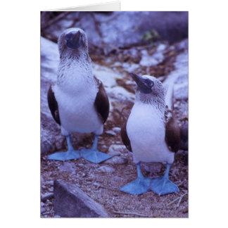 Galapagos Blue-Footed Birds Card