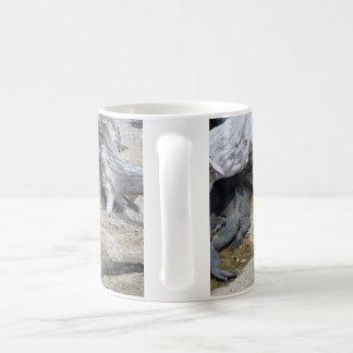 galapagos Collection - Marine Iguanas Coffee Mug