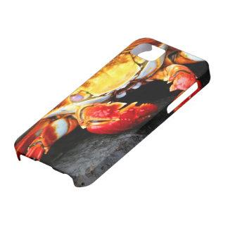 Galapagos Crab iPhone SE/5/5s Case
