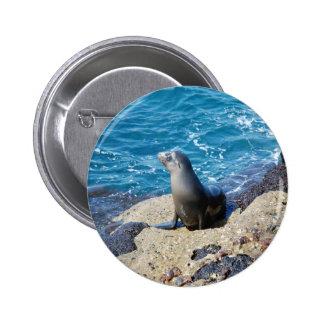 Galapagos Fur Seal Buttons