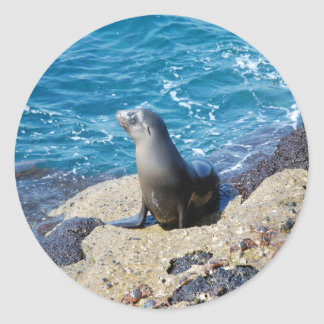 Galapagos Fur Seal Classic Round Sticker