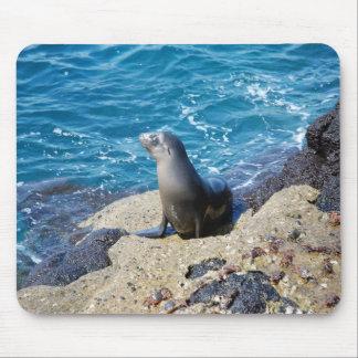 Galapagos Fur Seal Mouse Pad