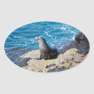 Galapagos Fur Seal Oval Sticker