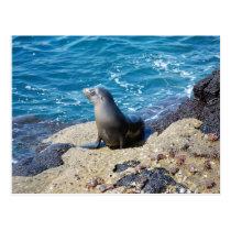 Galapagos Fur Seal Postcard