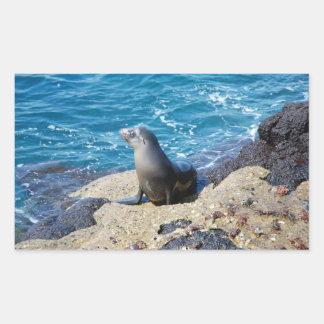 Galapagos Fur Seal Rectangular Sticker
