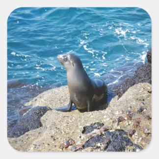 Galapagos Fur Seal Square Sticker