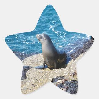 Galapagos Fur Seal Star Sticker