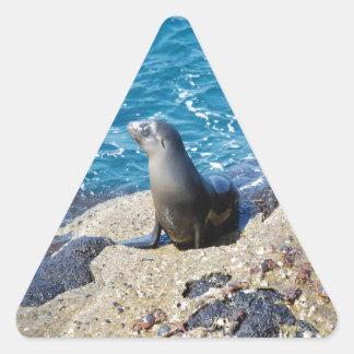 Galapagos Fur Seal Triangle Sticker