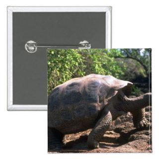Galapagos Giant Tortoise Dome-Shaped type walkin Pinback Buttons