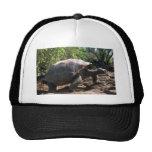 Galapagos Giant Tortoise (Dome-Shaped type) walkin Mesh Hats