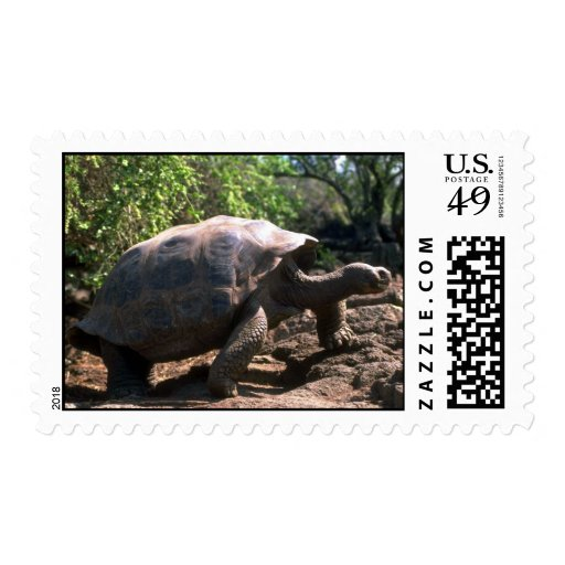 Galapagos Giant Tortoise (Dome-Shaped type) walkin Postage Stamps