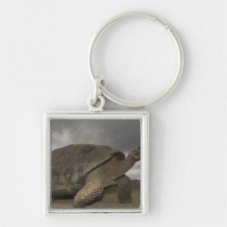Galapagos Giant Tortoise Geochelone Keychain