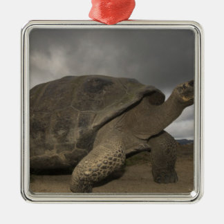 Galapagos Giant Tortoise Geochelone Metal Ornament