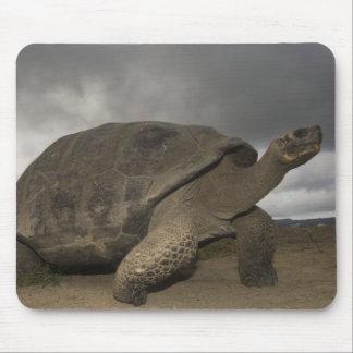 Galapagos Giant Tortoise Geochelone Mouse Pad