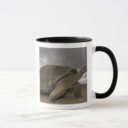 Galapagos Giant Tortoise Geochelone Mug