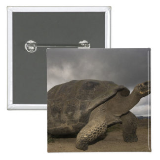 Galapagos Giant Tortoise Geochelone Pinback Button