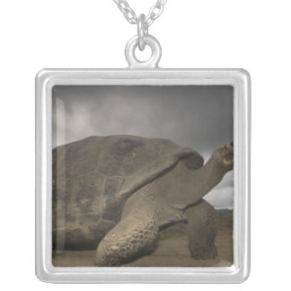 Galapagos Giant Tortoise Geochelone Silver Plated Necklace