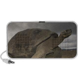 Galapagos Giant Tortoise Geochelone iPod Speaker