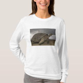 Galapagos Giant Tortoise Geochelone T-Shirt