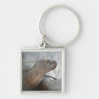 Galápagos giant tortoise photograph keychain