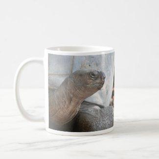 Galápagos giant tortoise photograph mug